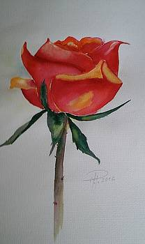 Rose 2016 by Hedwig Pen