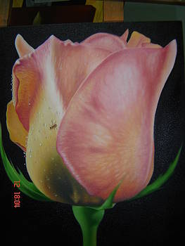 Rose 3 by Luis  Jesus