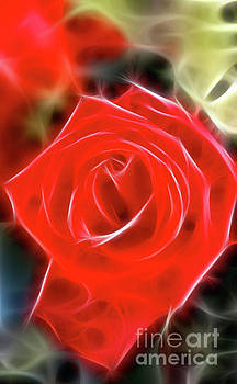 Gary Gingrich Galleries - Rose-5827-Fractal