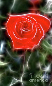 Gary Gingrich Galleries - Rose-5879-Fractal