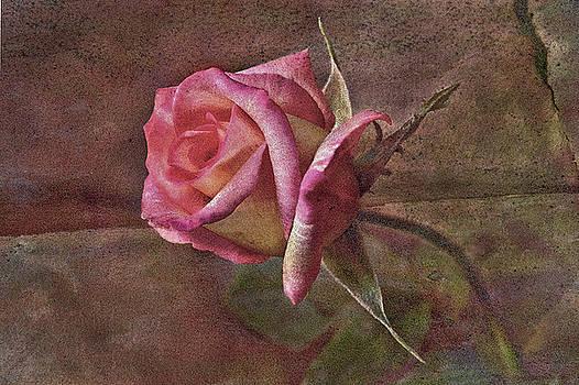 James Steele - Rose Aged Beauty
