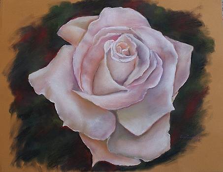 Rose by Ana Camilo