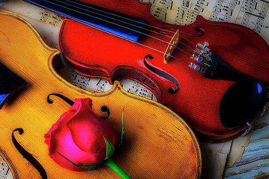 Rose And Two Violins by Garry Gay