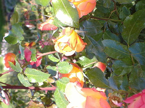 Rose art by Alice Eckmann