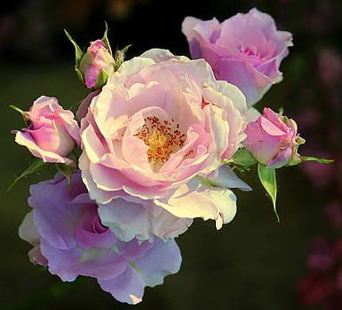 Rosanne Jordan - Rose Art