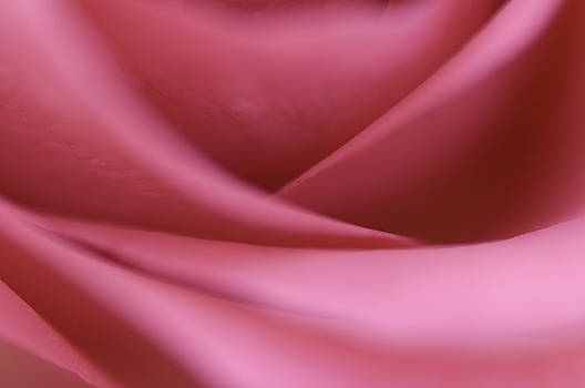 Rose Detail by Silke Magino