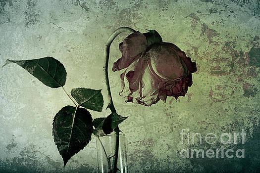 Heiko Koehrer-Wagner - Rose Flower In A Vase 4