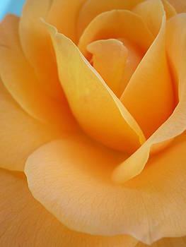 Rose for Louise by Kim Blumenstein