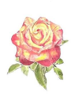 Rose for Mom by Gary Springer