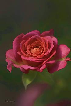 Deborah Benoit - Rose Fragrance