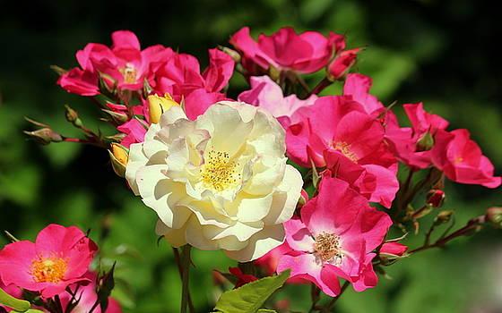 Rosanne Jordan - Rose Friendship