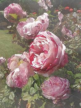 Rose Garden           by Megan Nicole McKinney