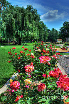 Rose Garden in Bloom by Iris Greenwell