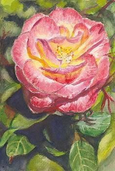 Rose Greeting Card by Dai Wynn