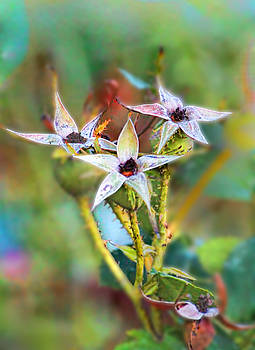 Rose Hips in Fall by Renee Marie Martinez
