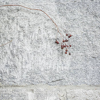 Rose Hips on Gray Granite by Morgain Bailey