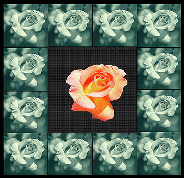 Rose In A Box Of Roses by Constance Lowery