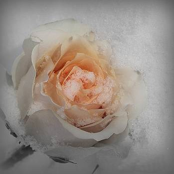 Rose in Winter by Chayla Brown