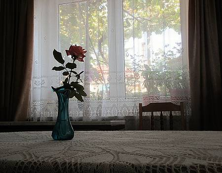 Rose Indoor by Galina Todorova
