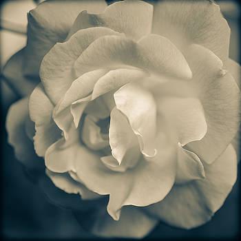 Ronda Broatch - Rose is Rose Tonal