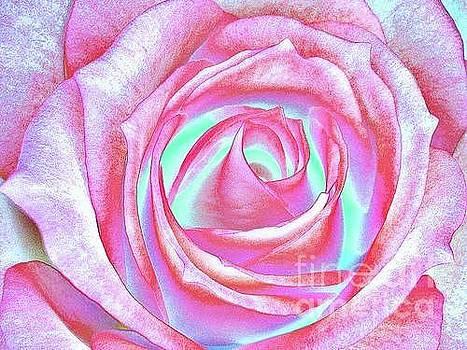Rose iz 33 by Dave Olmsted