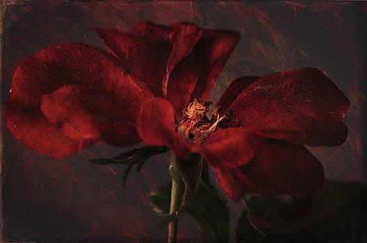 Rose by Jerri Moon Cantone