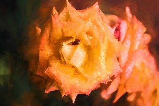Rose by Karen Varnas