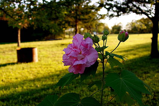 Rose by Matthew Park