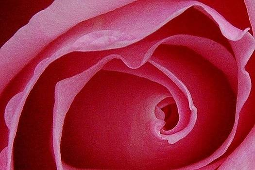 Bill Kellett - Rose Number One