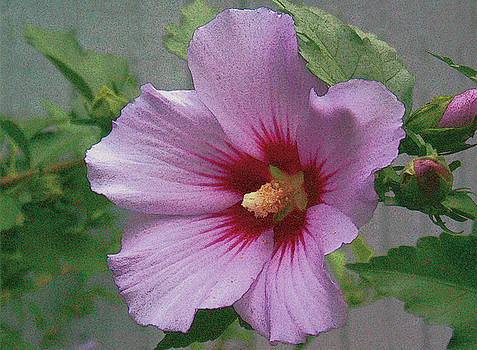 Rose of Sharon by John Dyess