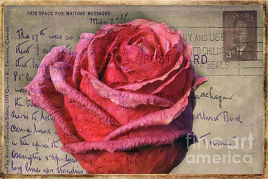 Rose on Vintage 1950's Post Card by Nina Silver
