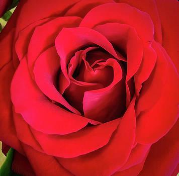 Ronda Broatch - Rose Red 2