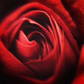 Rose Red by Mari Cody
