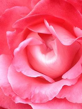 Photo of a Rose by Soul Artist Robin
