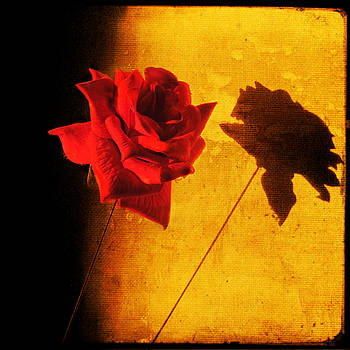 Rose Shadow on my Wall by Sonia Stewart
