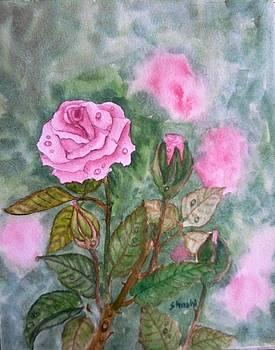 Rose by Shashikanta Parida