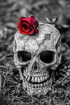 Martina Fagan - Rose Skull