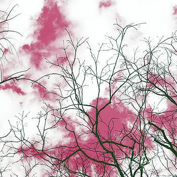 Rose Sky by Margaret Koc