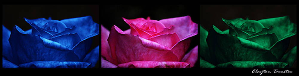 Clayton Bruster - Rose Tryptich