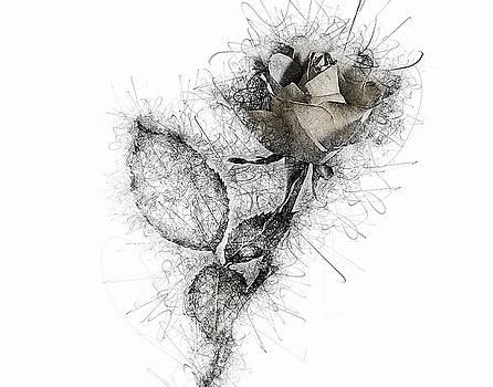 Rose Variation#03 by Richard Wiggins