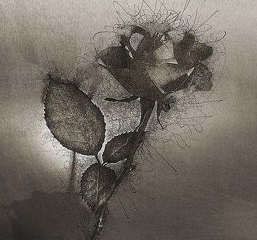 Rose Variation#04 by Richard Wiggins
