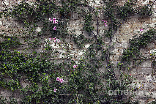 Svetlana Sewell - Rose Wall