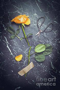 Rose With Scissors by Amanda Elwell
