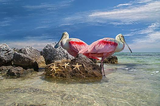 Roseate Spoonbill Florida Keys by Betsy Knapp