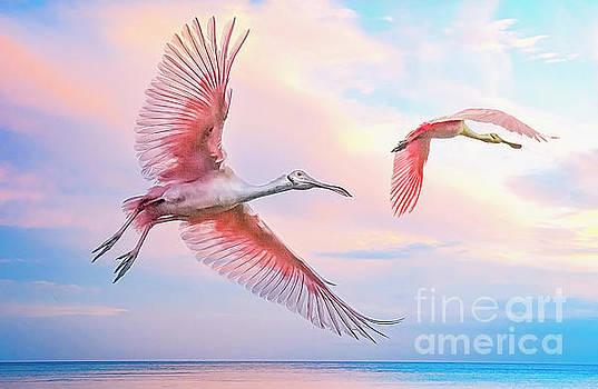 Roseate Spoonbills in flight. by Brian Tarr