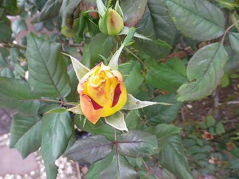 Rosebud #2 by Jonathan Barnes