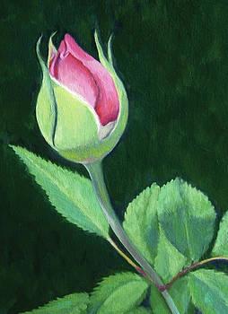 Rosebud by Jane  Simonson