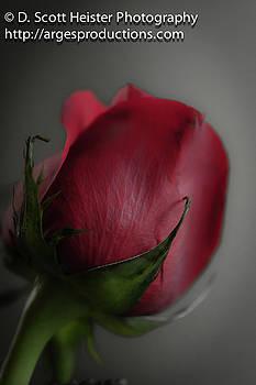 RoseBud by Scott Heister