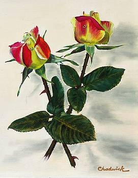 Rosebuds by Phil Chadwick