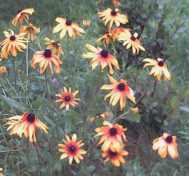 Rosemarys Black-Eyed-Susans Close-Up by Rosemary Mazzulla